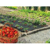 Acolchado cultivo fresas FRESASILM