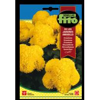 Crisantemo de los Jardines amarillo
