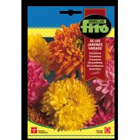 Semillas de Crisantemo de los Jardines, variado