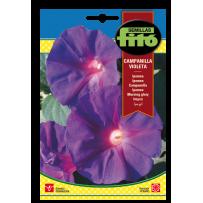 Ipomea - Campanilla violeta