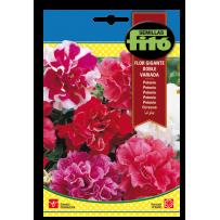Petunia doble flor gigante, variada