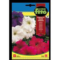 Petunia híb. compacta enana, variada
