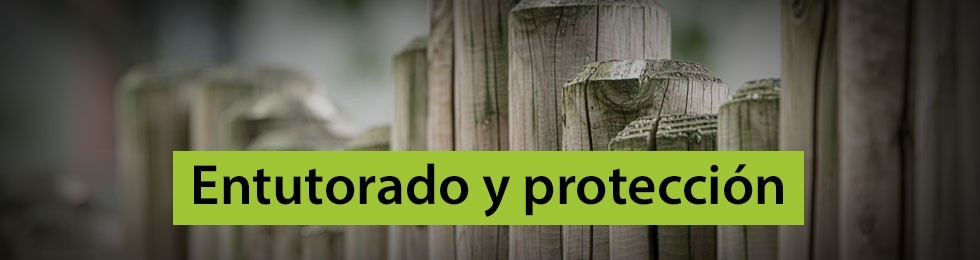 Entutorado y protección de plantas
